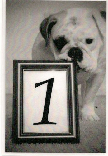 Bulldog Wedding Table Number