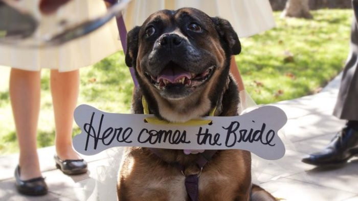 dog wedding