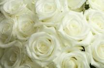 elegant white wedding flowers
