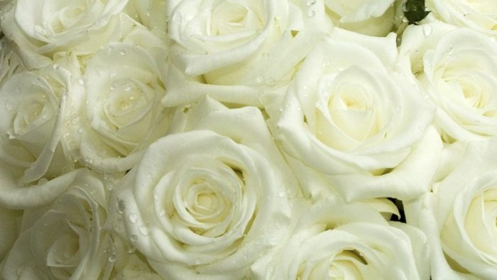 elegant white wedding flowers