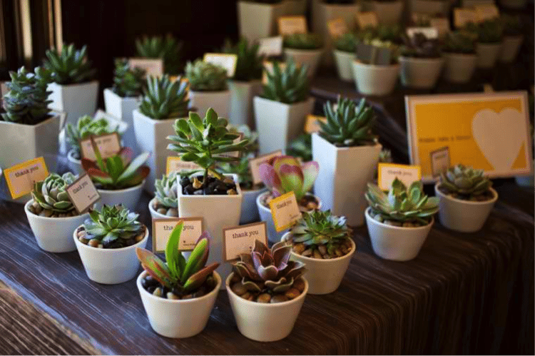 mini potted plants