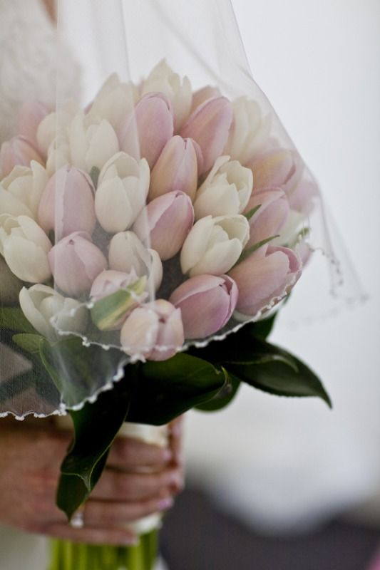 wedding tulips