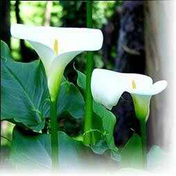 lilies wedding flowers 3