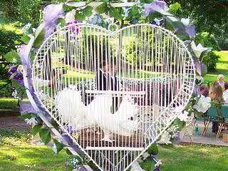 pigeons and weddings 2