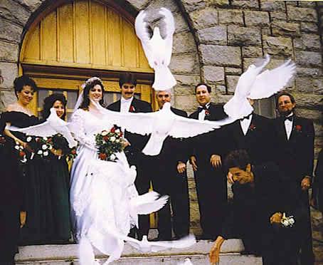 pigeons and weddings