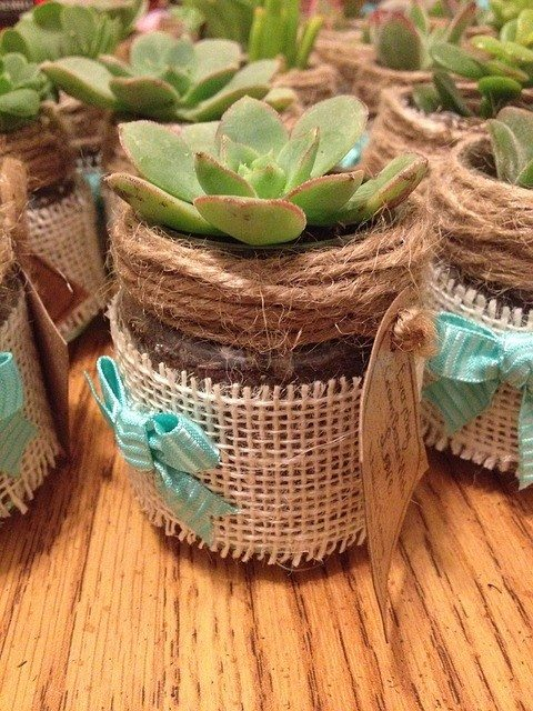 18-succulent-wedding-favors