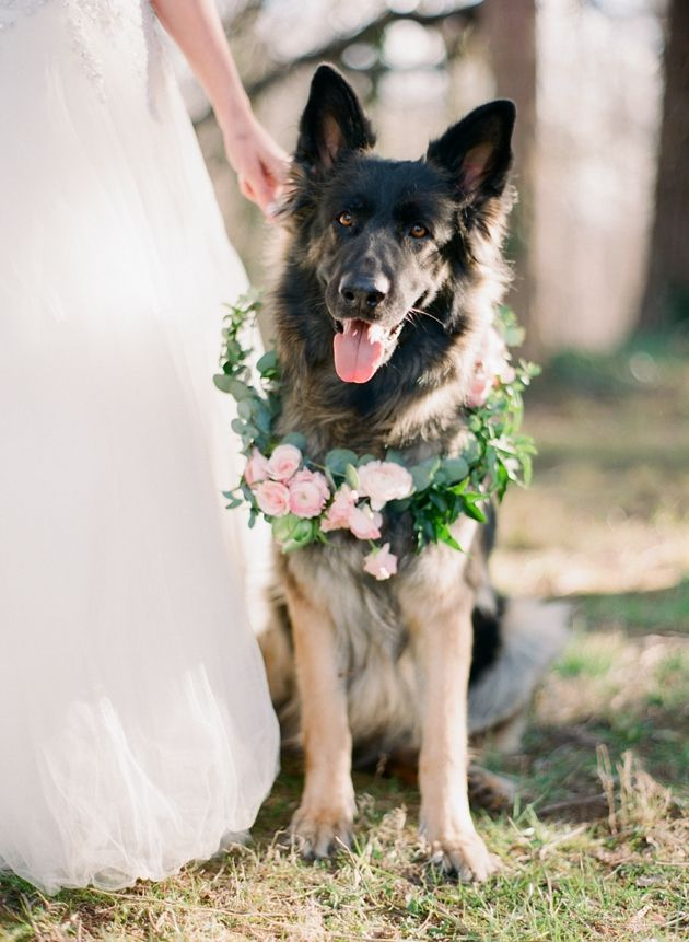wedding ideas for dog lovers it s puppy theme weddings and bridal showers 27910