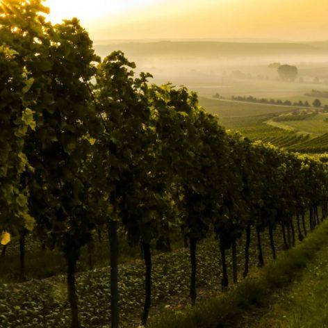 best vineyard wedding music